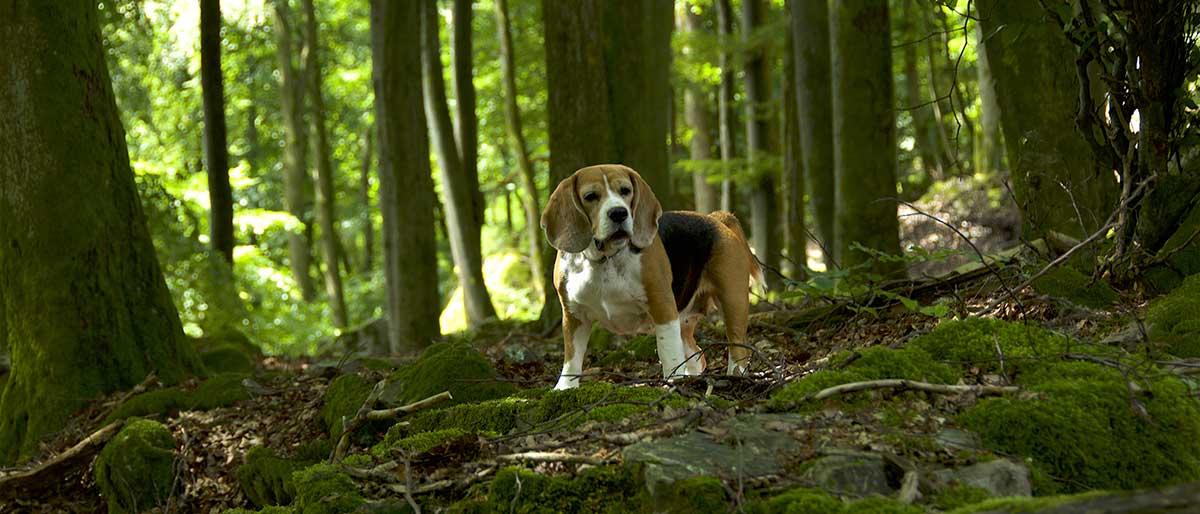 Emma im Wald